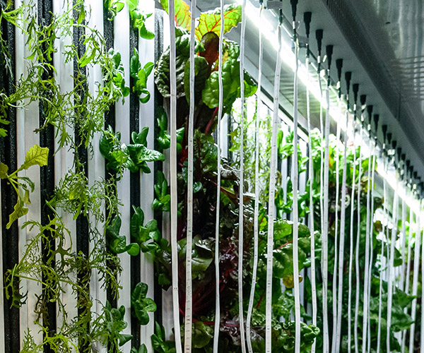 low water consumption of vertical hydroponics systems